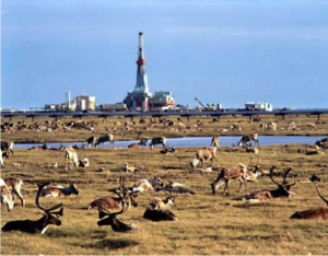 Wildlife flourishing at Prudhoe Bay, Alaska